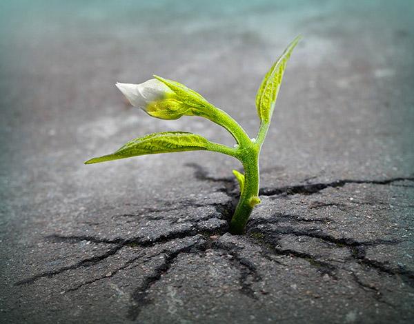 La Resilienza: quando il dolore ci fortifica